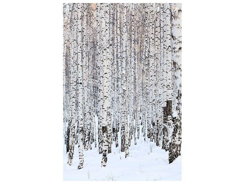 Poster Der Birkenwald im Winter