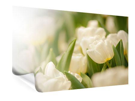 Poster Tulpenperspektive