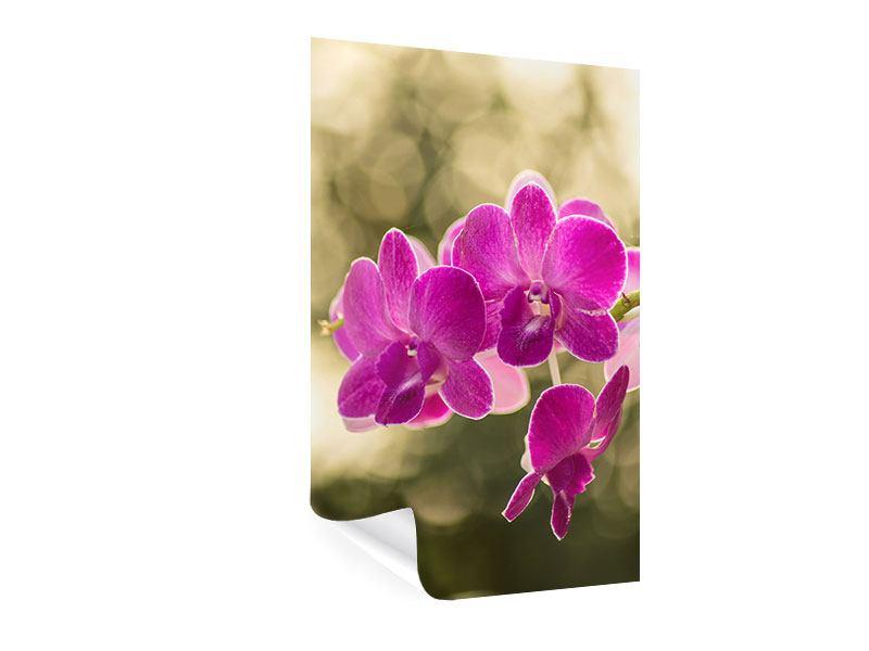 Poster Orchideen Violett