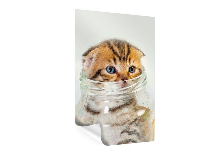 Poster Faltohrkatzenbaby