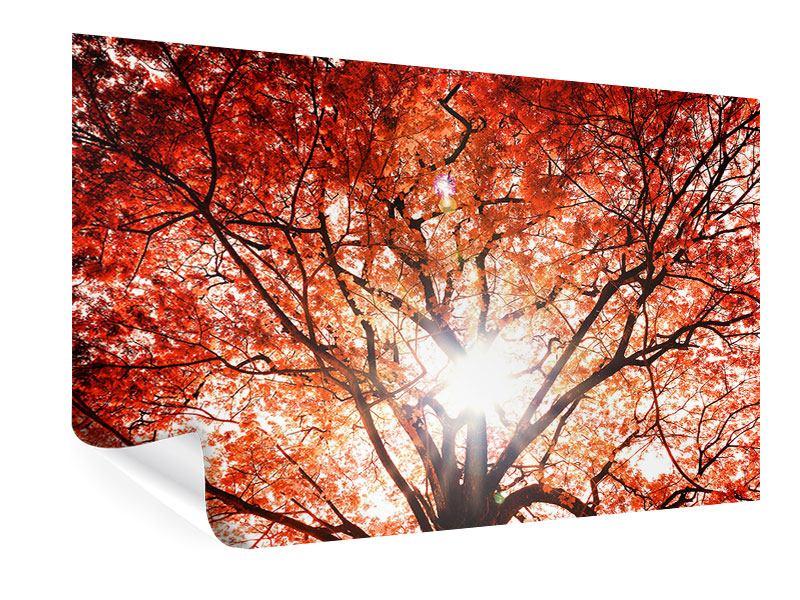 Poster Herbstlicht