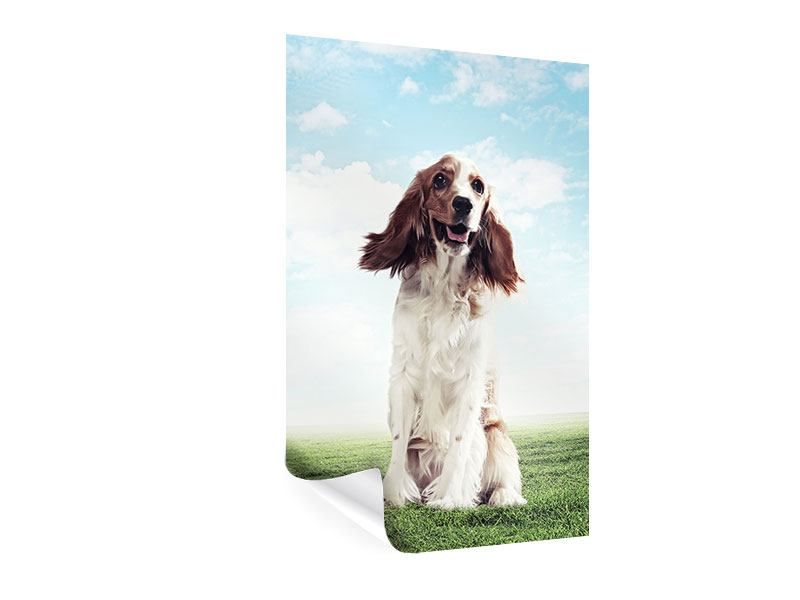 Poster Funny Dog