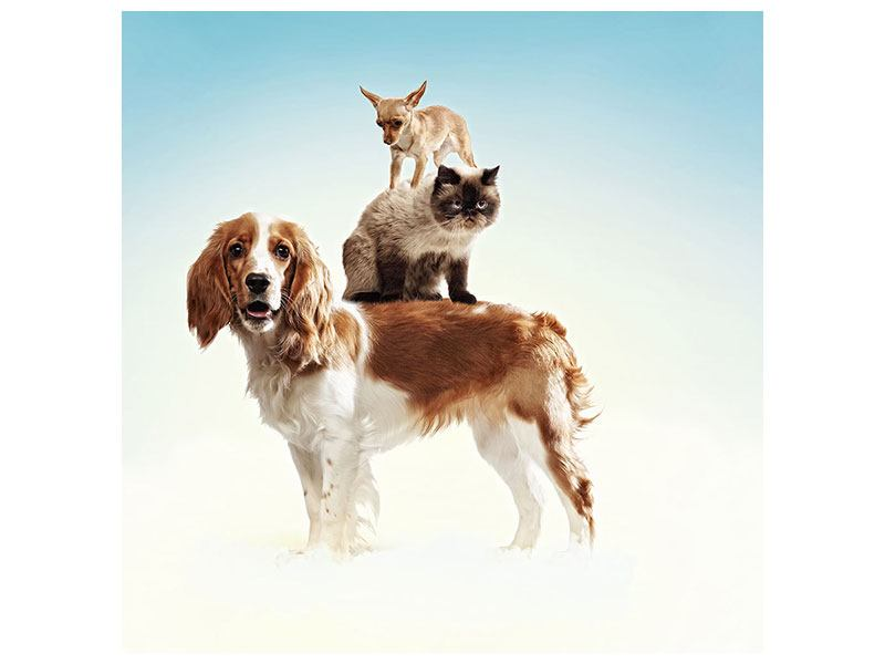 Poster Tierstapel