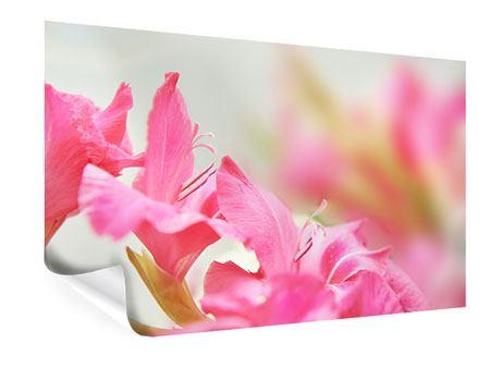 Poster Gladiolen
