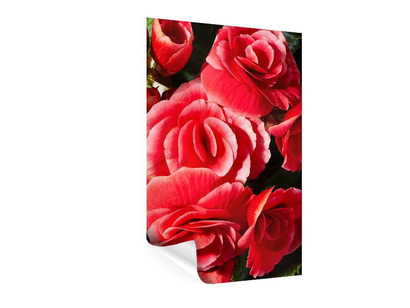 Poster Rote Rosen