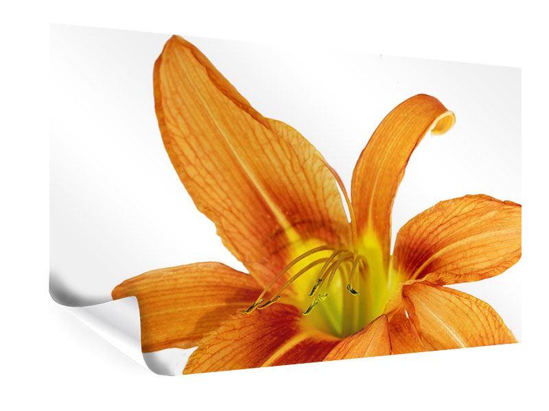Poster Die Tiger-Lilie
