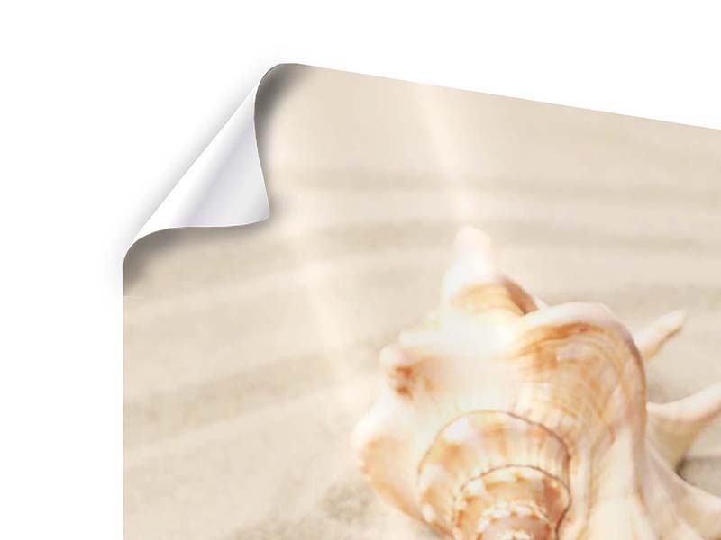 Poster Die Muschel und der Seestern