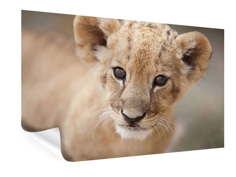 Poster Löwenbaby