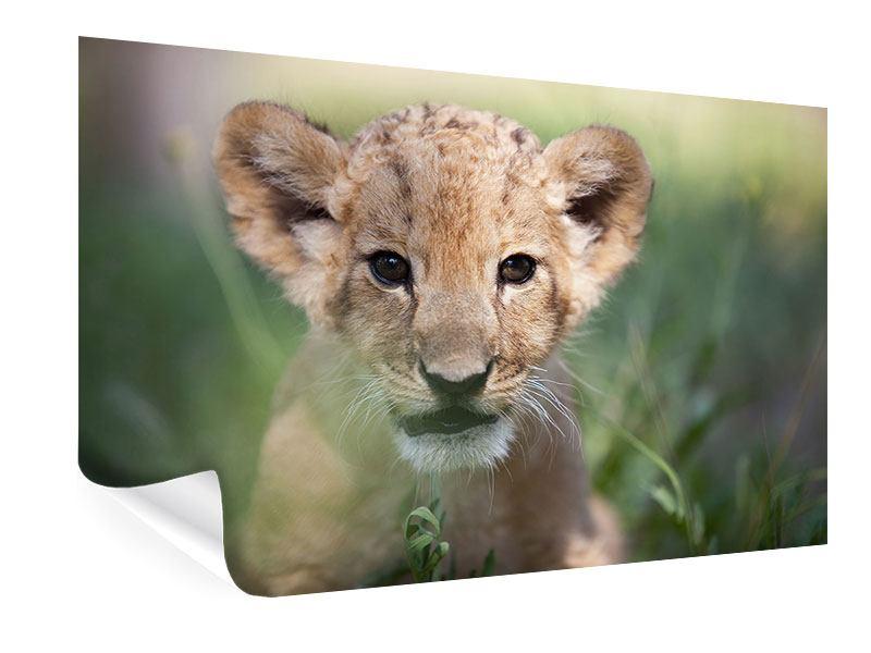 Poster Das Löwenbabay
