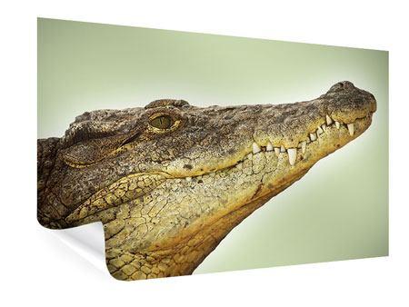 Poster Close Up Alligator