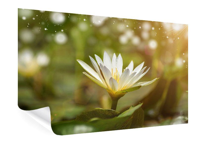 Poster Lilien-Lichtspiel
