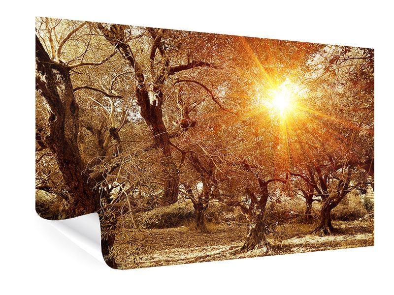Poster Olivenbäume im Herbstlicht