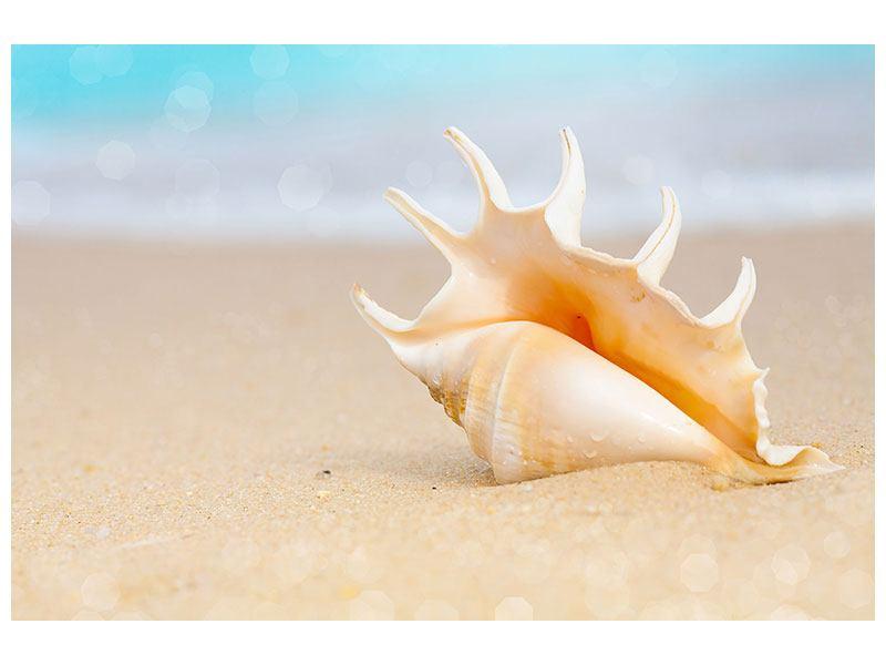 Poster Die Muschel am Strand