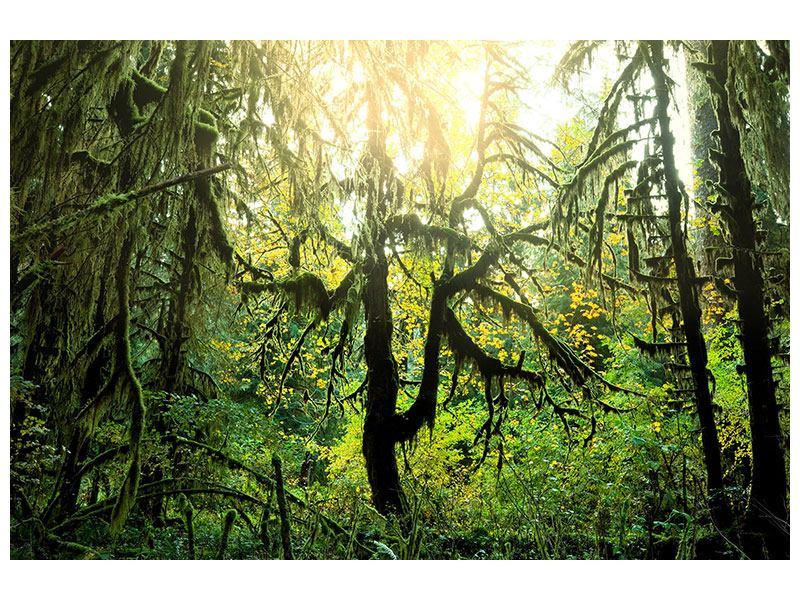 Poster Verträumter Wald