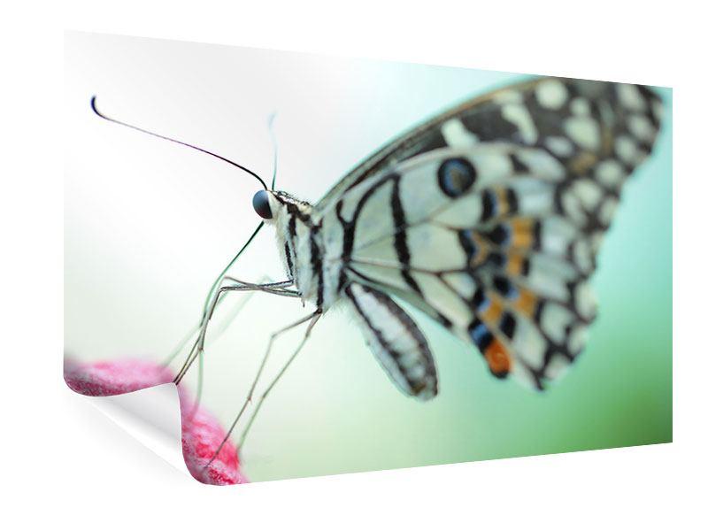 Poster Schmetterling XXL