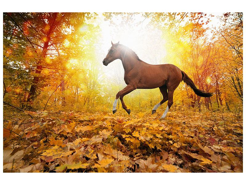 Poster Vollblut im Herbstwald