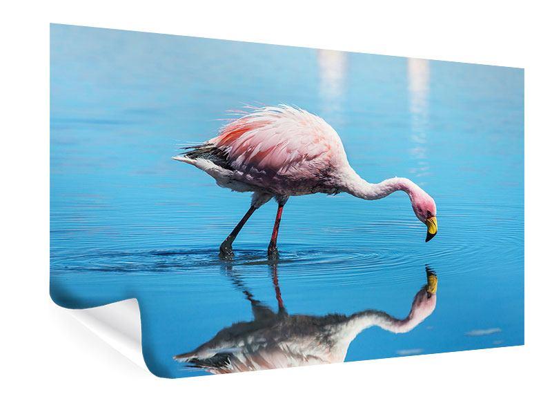 Poster Der Flamingo