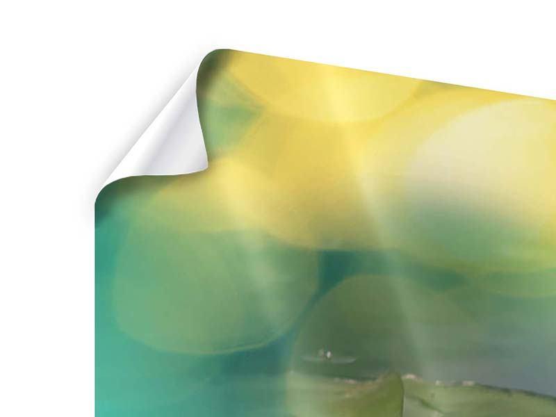 Poster Lotus-Spiegelung