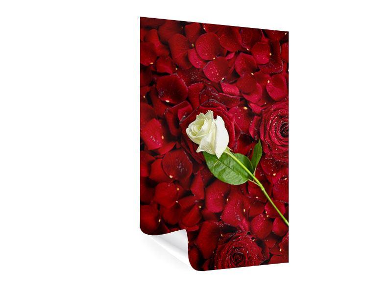Poster Auf Rosen gebettet
