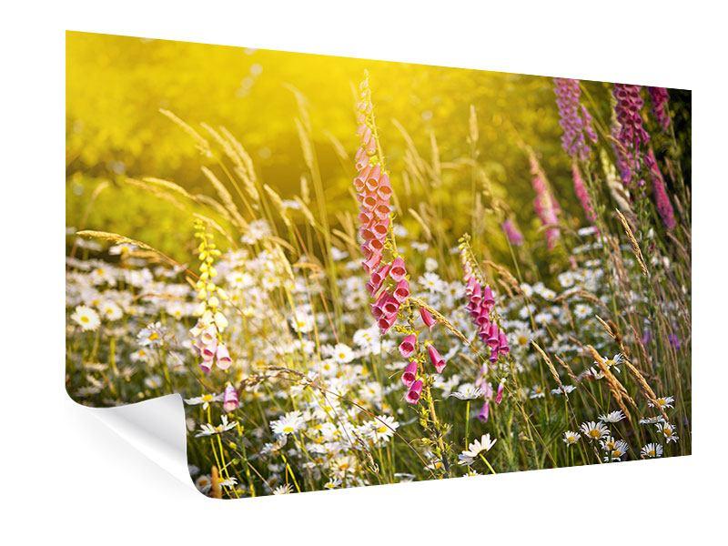 Poster Sommerliche Blumenwiese