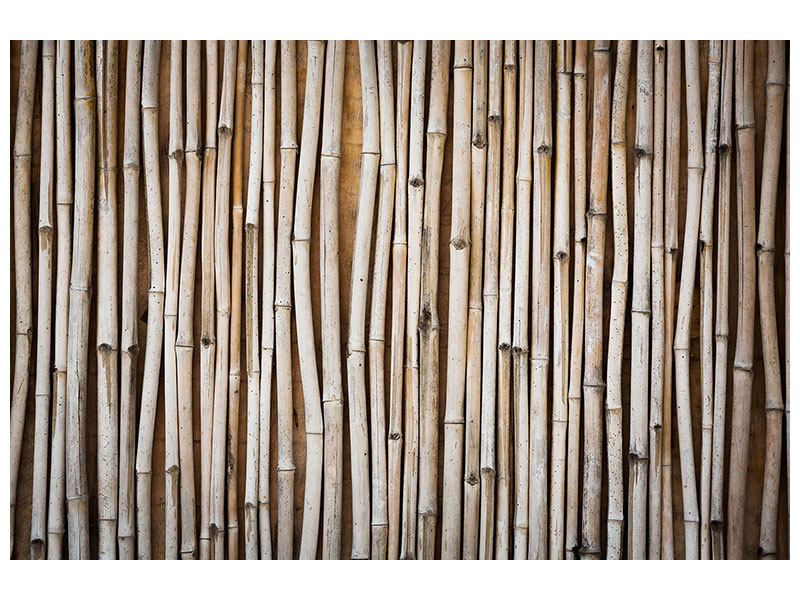 Poster Getrocknete Bambusrohre