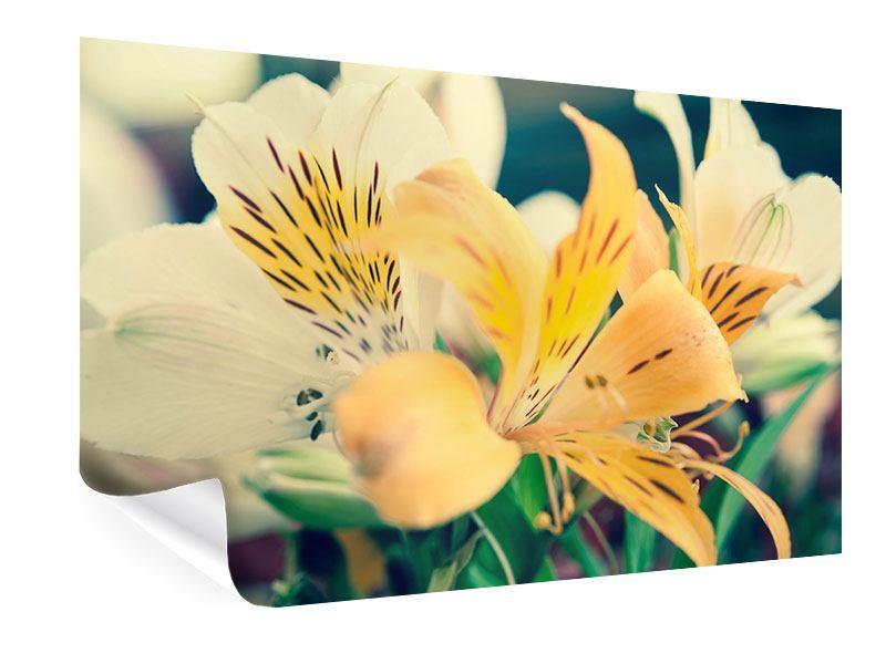 Poster Tigerlilien