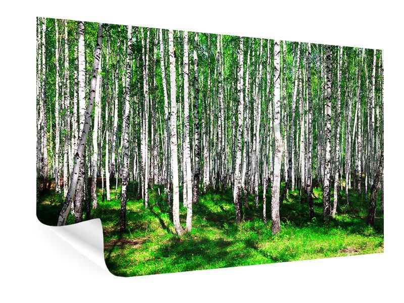 Poster Sommerlicher Birkenwald