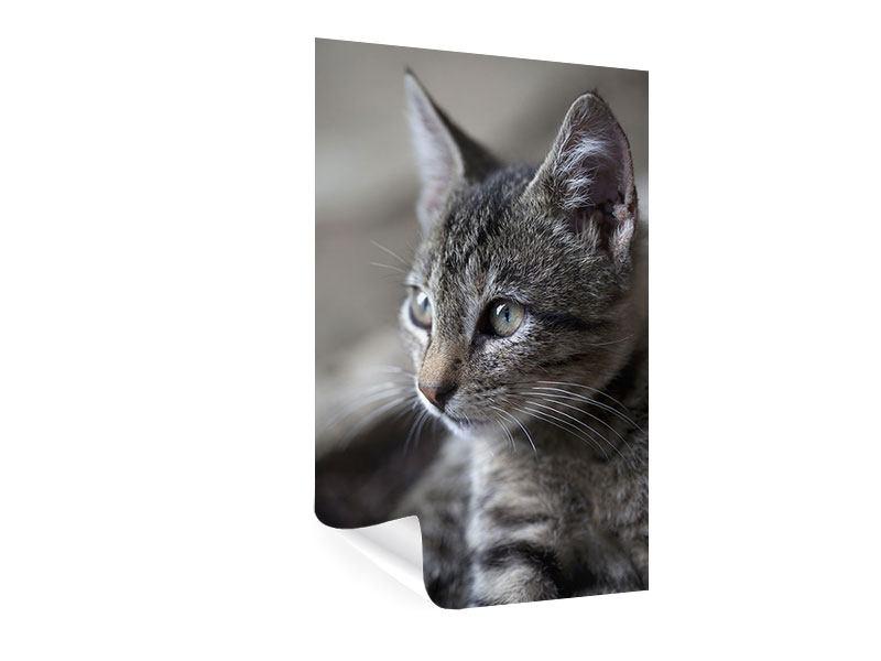 Poster Tigerkatze