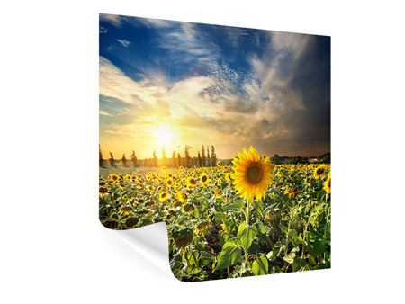 Poster Sunny Flowers