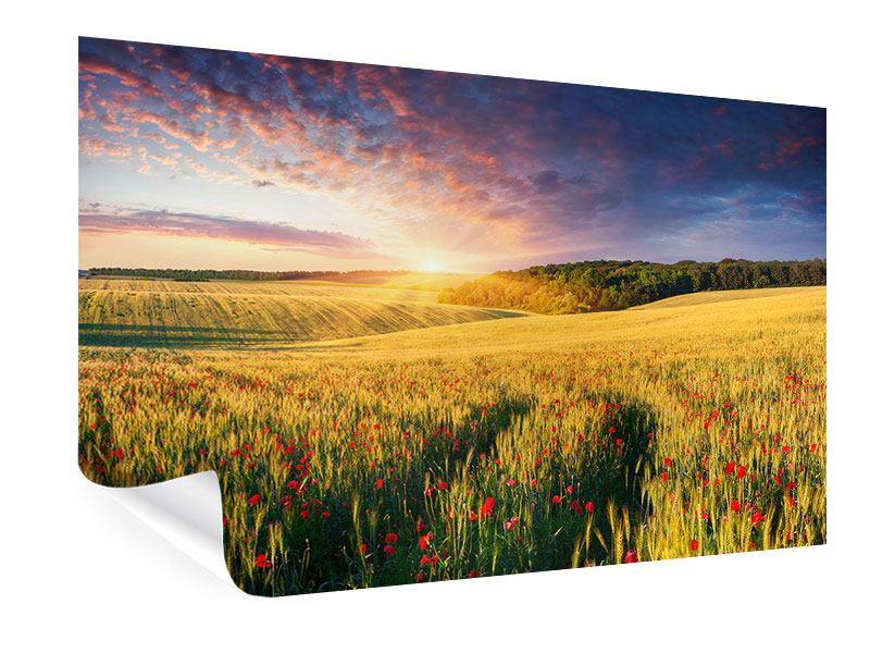 Poster Ein Blumenfeld bei Sonnenaufgang