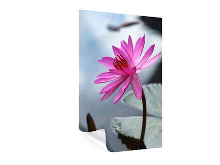 Poster Grosse Lotus in Pink