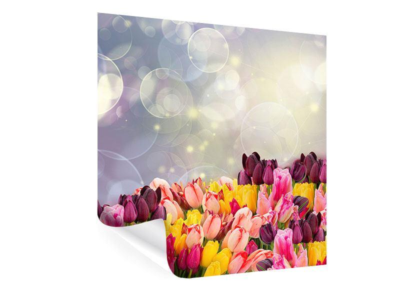 Poster Buntes Tulpenbeet im Lichtspiel