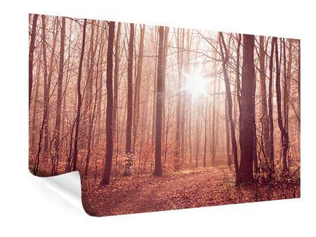 Poster Sonnenuntergang im Herbstwald