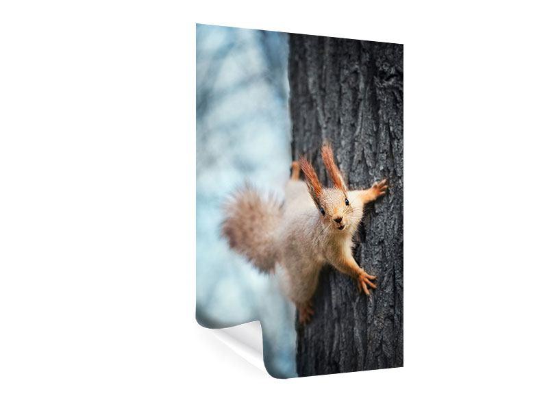 Poster Das Eichhörnchen