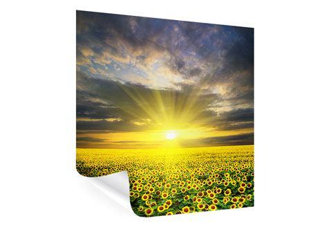 Poster Abenddämmerung bei den Sonnenblumen