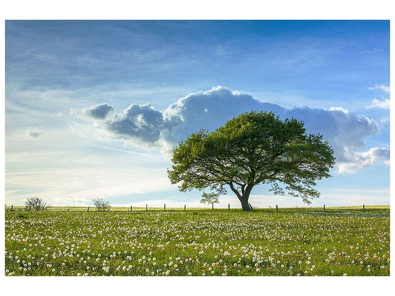 Poster Frühlingsbaum