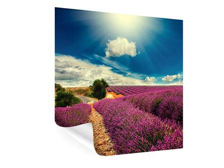 Poster Das Lavendeltal