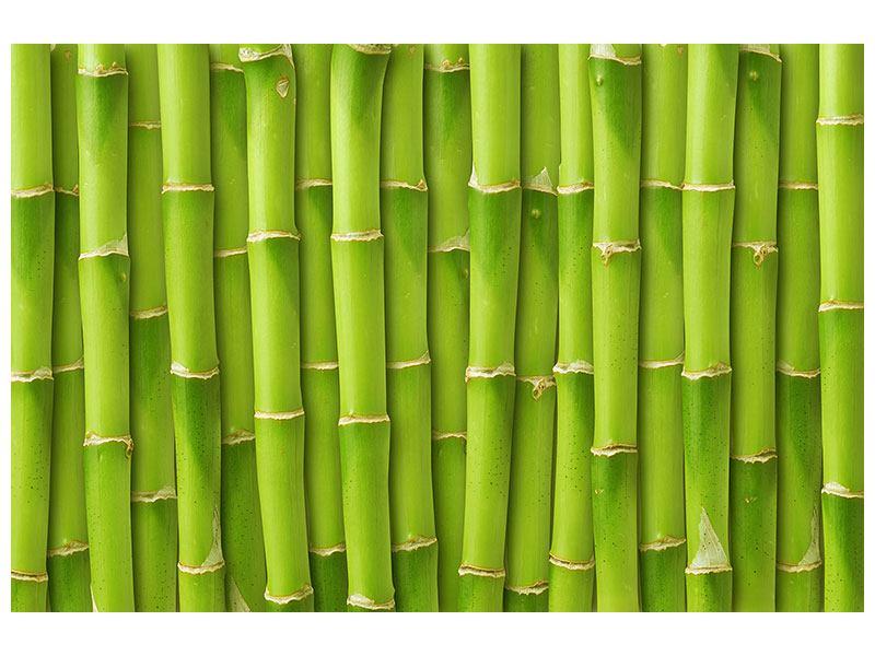 Poster Bambuswand