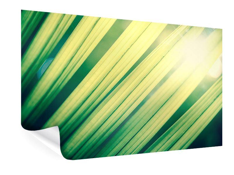 Poster Beleuchtetes Palmblatt