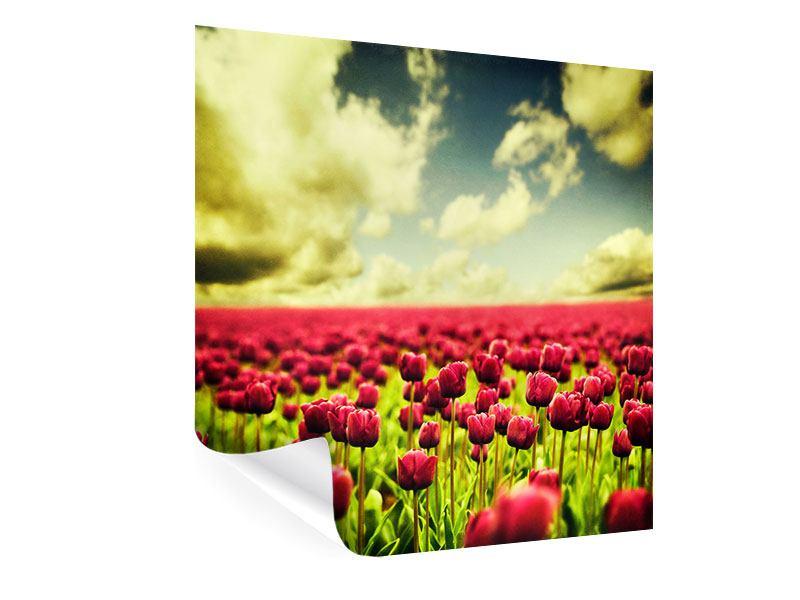Poster Ein Tulpenfeld