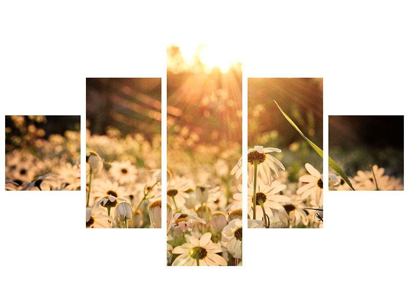 Poster 5-teilig Gänseblümchen bei Sonnenuntergang