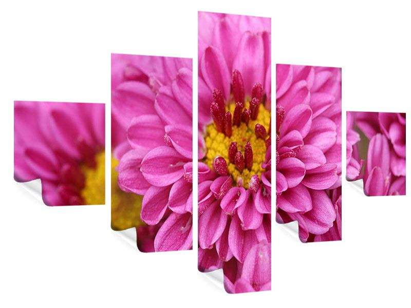 Poster 5-teilig Chrysanthemen