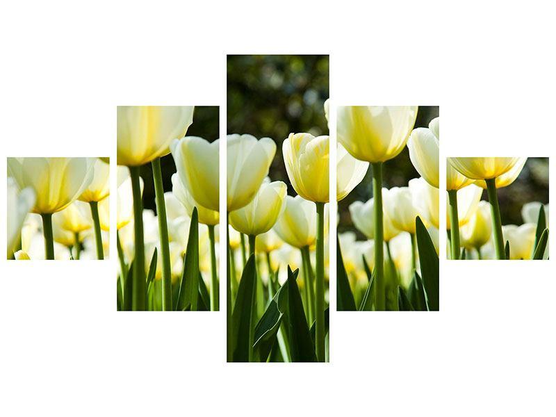 Poster 5-teilig Tulpen bei Sonnenuntergang