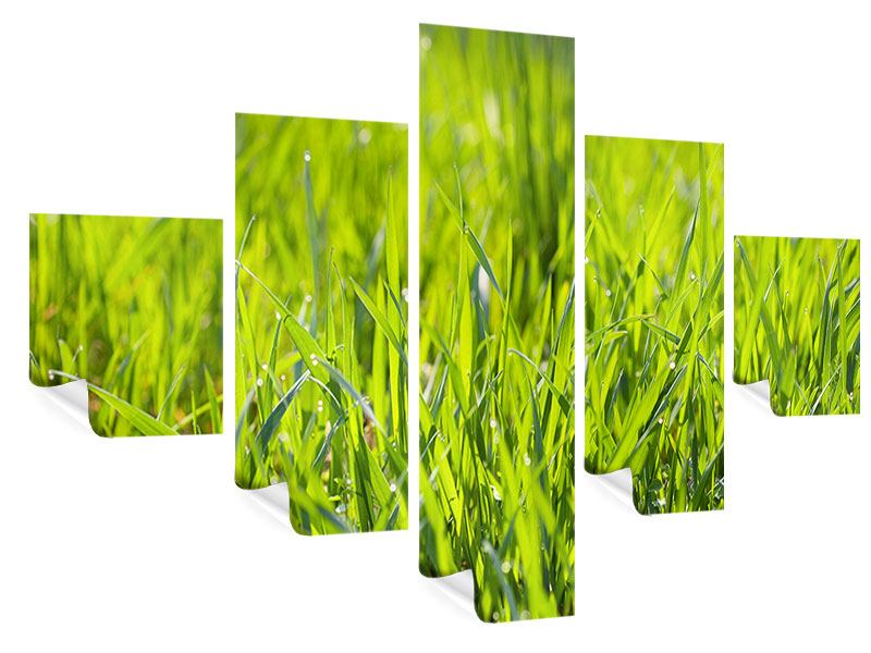 Poster 5-teilig Gras im Morgentau