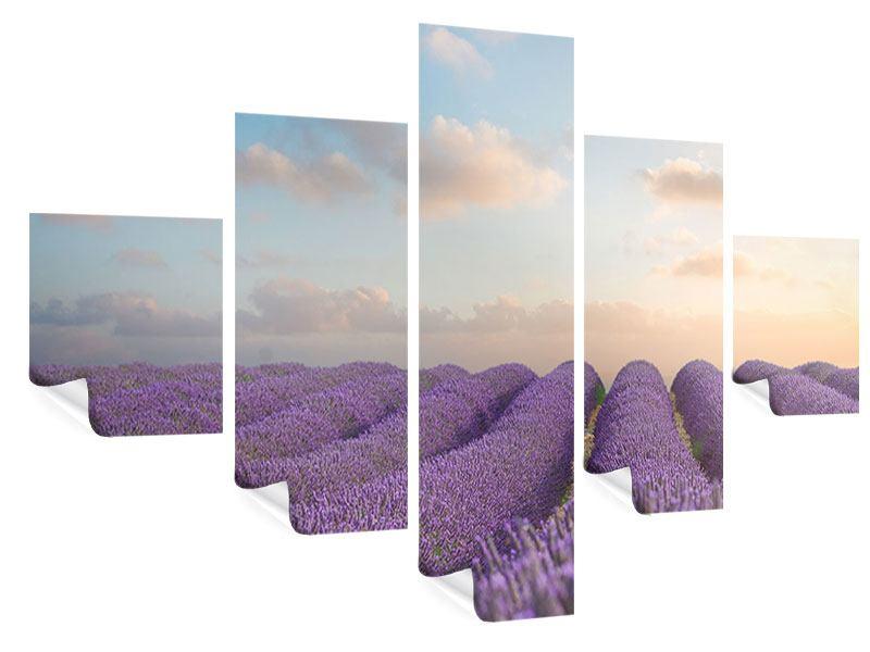 Poster 5-teilig Das blühende Lavendelfeld