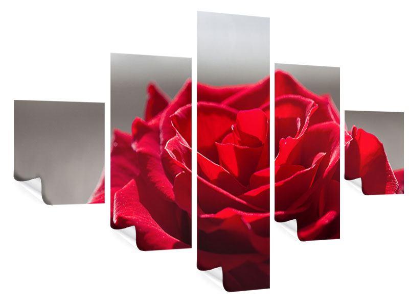 Poster 5-teilig Rote Rosenblüte