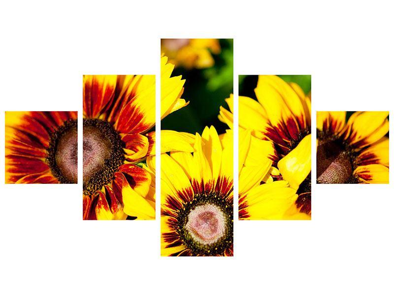 Poster 5-teilig Reife Sonnenblumen