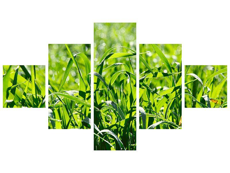 Poster 5-teilig Sonniges Gras