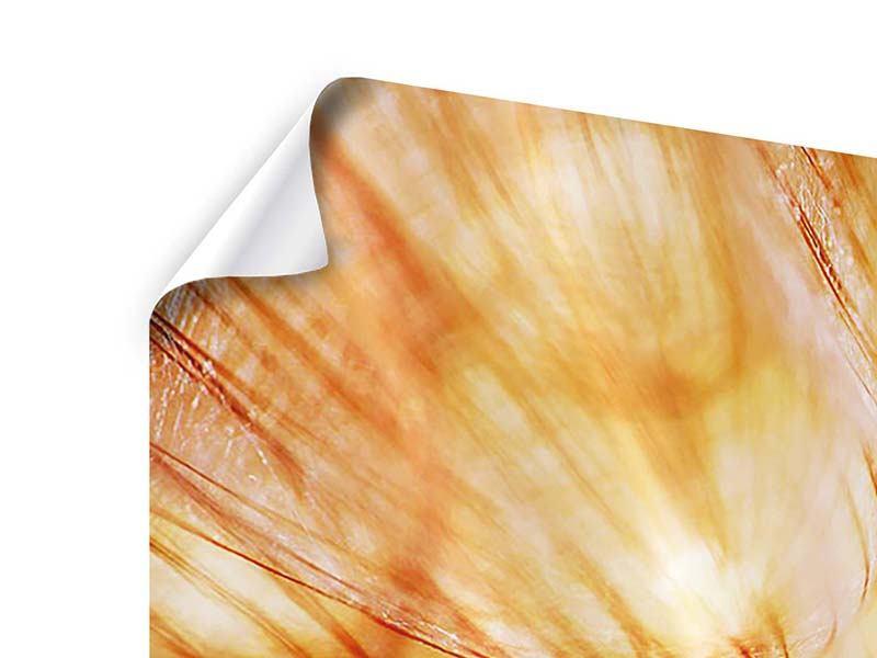 Poster 5-teilig Close Up Pusteblume im Licht