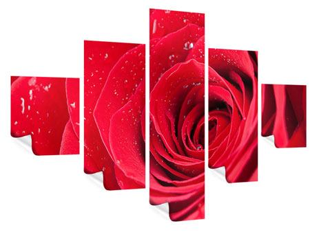 Poster 5-teilig Rote Rose im Morgentau